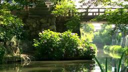 八幡堀 紫陽花 Footage