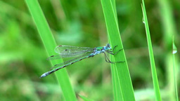 Dragonfly Footage