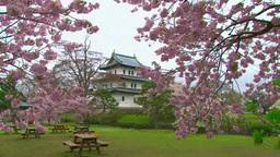 桜と松前城 Footage