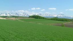 風に揺れる小麦畑と十勝岳連邦 Footage