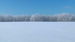 Snowy field and the rime ice Footage