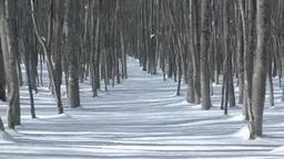 ブナ林と雪の道 Footage