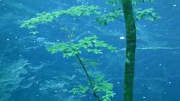十二湖の青池 Footage