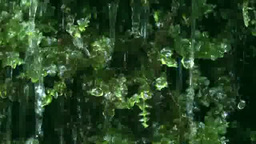 Moss and water droplets Footage