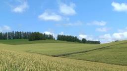 丘の小麦畑 Footage