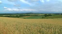 風に揺れる小麦畑 Footage