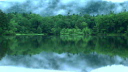 霧が流れる湖畔の森 Footage