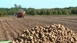 Harvest of potatoes Footage