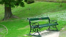 公園のベンチと小鳥 Stock Video Footage