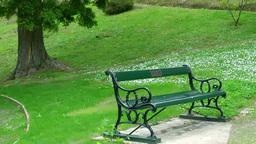 公園のベンチと小鳥 Footage