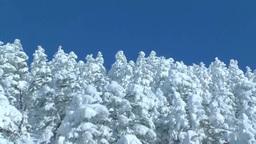 十勝岳温泉の樹氷 Footage
