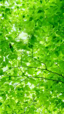 Sunlight and a fresh green forest Stock Video Footage