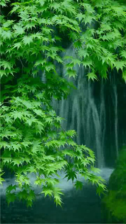 Fresh greenery and a waterfall Footage