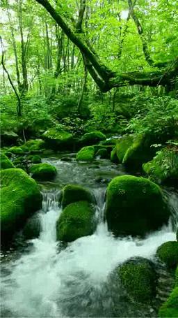 Flow and moss 影片素材