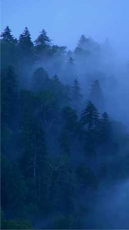 Forest of fog Filmmaterial