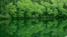 Green lake shore Footage