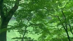 ブナ林と十二湖 Footage