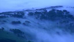 朝霧の森 Footage