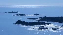 輝く海とウミウ Footage