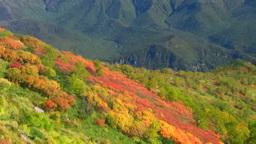 銀仙台の紅葉とニセイカウシュペ山 Footage