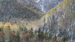 降雪と紅葉の三国峠の森 Footage