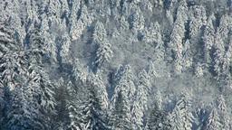 阿寒横断道路から望む雪の針葉樹の森 Stock Video Footage