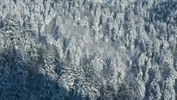 阿寒横断道路から望む雪の針葉樹の森 Footage