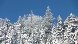 小清水峠の雪の針葉樹の森 Stock Video Footage