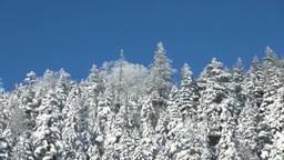 小清水峠の雪の針葉樹の森 Footage