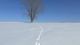 雪原の一本木と足跡 Stock Video Footage
