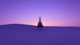 夕焼の雪原と一本木 Stock Video Footage