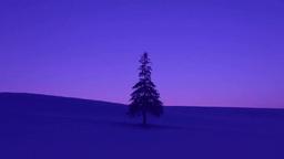 夕焼の雪原と一本木 Footage