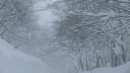 雪降る八甲田山の道 Footage