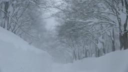 雪降る八甲田山の道 Stock Video Footage