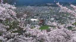 東北新幹線と桜 Stock Video Footage