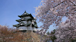 Hirosaki castle and cherry blossoms Stock Video Footage