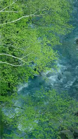 青い川と新緑 Stock Video Footage