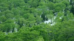 八甲田山の残雪と新緑のブナ林 Footage