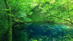 十二湖の新緑の青池 Stock Video Footage
