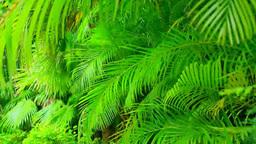 Palm tree Stock Video Footage