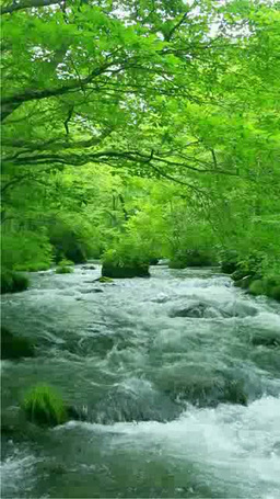 Oirase stream flowing Stock Video Footage