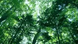 Woods Footage