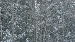 Snowfall in a forest Stock Video Footage