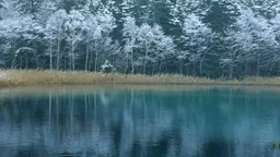 雪降るオンネトー湖畔 Footage