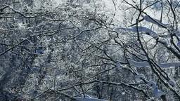 霧氷の鳥沼と降雪 Stock Video Footage
