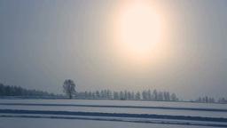 降雪と丘の一本木 Stock Video Footage