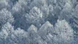 Ice larch with rime Stock Video Footage