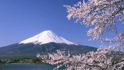 Fuji and cherry blossom from kawaguchi lake Stock Video Footage
