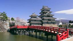 桜と松本城 Footage
