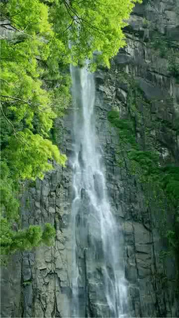 Nachi Falls Stock Video Footage